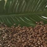 COSTA RICA - organic